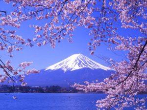 Fujisan and sakura