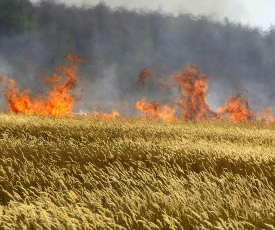 ukr_grain_fields_burning