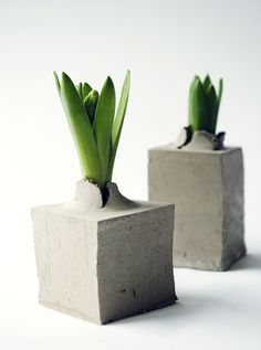 disposable-flower-pot-of-clay